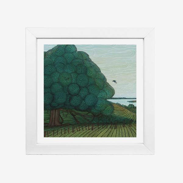 20853-elliot-8x8-puriri-tree