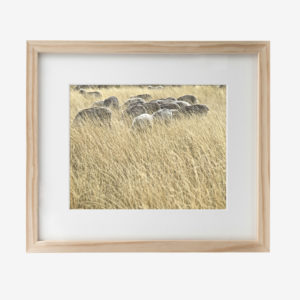 22039-howard-10x8withmat-Grazing
