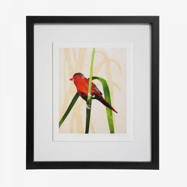 Fiona Roderick Framed Print, Crimson Finch